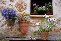 Flowers on the wall. Valldemossa.