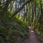 """Afternoon Forest Stroll"" by goatlockerguns"