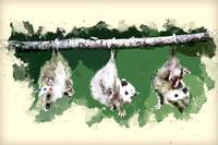 Baby Possums Hanging by Their Tails