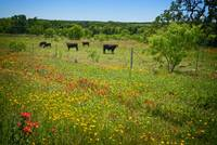 Wildflower Pastures on the willow City Loop