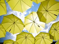 Yellow Umbrellas