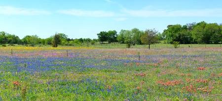 Hill Country Pastel Panorama