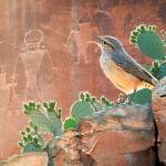 """wren at capitol reef petroglyphs"" by rchristophervest"