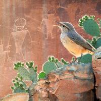 wren at capitol reef petroglyphs Art Prints & Posters by r christopher vest