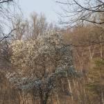 """Robert E Lee Park Tree Study#1"" by nahone"