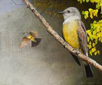 kingbirds along the canyon wall