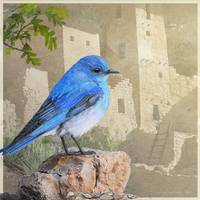 bluebird at the cliff palace
