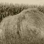 """Haybale and Corn Field"" by rhamm"