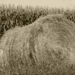 """Haybale and Corn Field"" by rhamm"