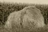 Haybale and Corn Field
