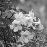 """""""Purple Flower on a Tree"""" by rhamm"""