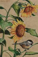 sunflower chickadee