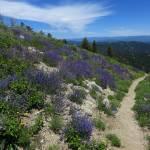 """Idaho Mountain Flowers"" by joeyartist"