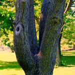 """""""Up Close Tree"""" by LostMoon72"""