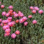"""""""Purple Flowers in a Garden"""" by rhamm"""