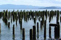 Old Pilings on the Columbia River