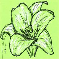 Green Lily