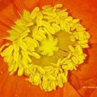 Spring Blossom Art Prints & Posters by Steve Shelasky