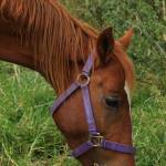"""Horse Grazing"" by rhamm"