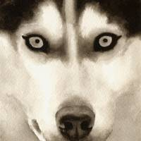 Siberian Husky Art Prints & Posters by David Rogers