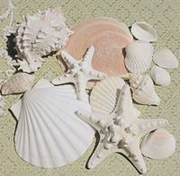 ORL-5222-1  Sea Shells Starfish Pastel Beach