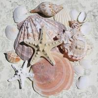 ORL-5224-4 STARFISH SEA SHELL BEACH DECOR