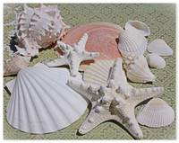 ORL-5238-2 Seashells. A SUMMER TREASURE