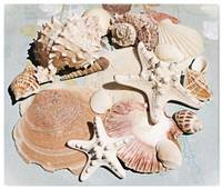 ORL-5240-3 Shells Sea Treasure Charm