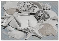 ORL-5245-3 Sea Shell Beach Decor. Hawaiian Sea bre