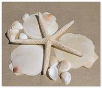 ORL-5247-1 Natural Shells. Beach decor