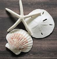 ORL-5617-1 Seashells on Wood X