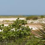 """""""Florida Beach Landscape"""" by Groecar"""