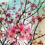 """ORL-5945 Joy flowers"" by Aneri"