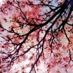 """ORL-5946 Hopeful Spring"" by Aneri"