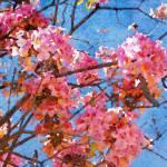 """ORL-5950 Spring Garden IV"" by Aneri"