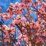 """""""ORL-5953 Spring Garden VII"""" by Aneri"""