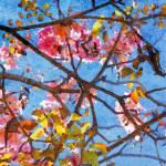"""""""ORL-5951 Spring Garden V"""" by Aneri"""