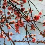 """ORL-5955 Spring Garden IX"" by Aneri"