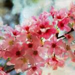 """ORL-5961-1 Cherry flowers III"" by Aneri"