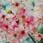 """""""ORL-5964 Cherry flowers VI"""" by Aneri"""