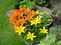 ORANGE AND YELLOW DAY LILLIES