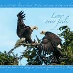 """""""Loving Eagles"""" by katelynch"""