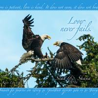 Loving Eagles Art Prints & Posters by Kate Lynch
