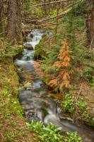 Rusty The Pine Tree and The Flowing Stream