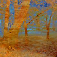The Beech Wood Art Prints & Posters by Valerie Anne Kelly