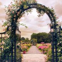 The Rose allee Art Prints & Posters by Jessica Jenney