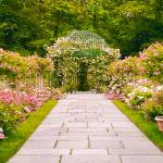"""Rose Garden Walkway"" by JessicaJenney"