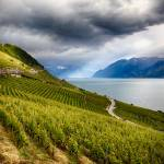 """Terraced Vineyard Overlooking Lake Geneva, Switzer"" by George_Oze"