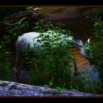 """""""Riverwalk"""" by LynnR"""