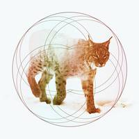 Lynx, Double Exposure Wildlife Art